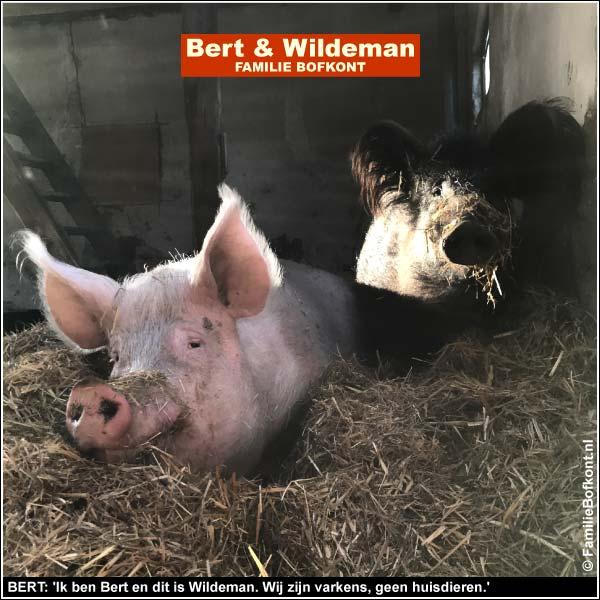 BERT: 'Ik ben Bert en dit is Wildeman. Wij zijn varkens, geen huisdieren'