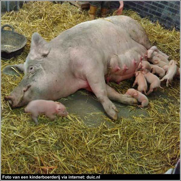 Foto van een kinderboerderij via internet: duic.nl