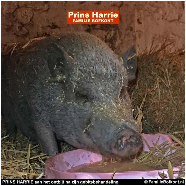 PRINS HARRIE aan het ontbijt na zijn gebitsbehandeling