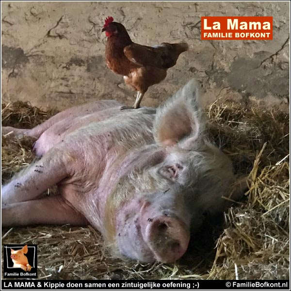 LA MAMA & Kippie doen samen een zintuigelijke oefening ;-)