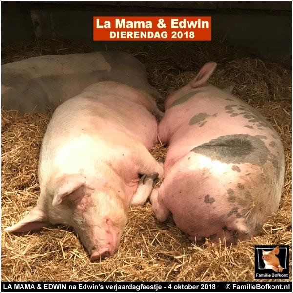 LA MAMA & EDWIN na Edwin's verjaardagsfeestje - 4 oktober 2018