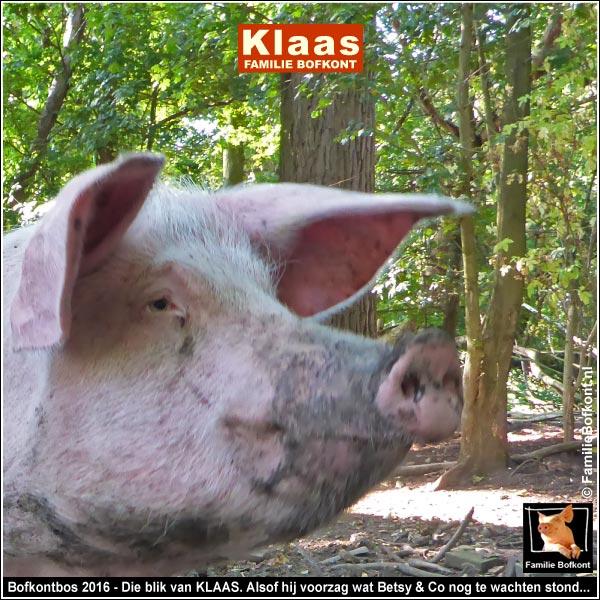 Bofkontbos 2016 - Die blik van KLAAS. Alsof hij voorzag wat Betsy & Co nog te wachten stond...