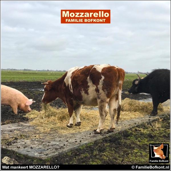 Wat mankeert MOZZARELLO?