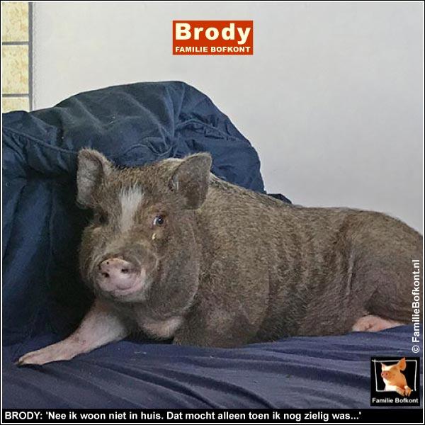 BRODY: 'Nee ik woon niet in huis. Dat mocht alleen toen ik nog zielig was...'