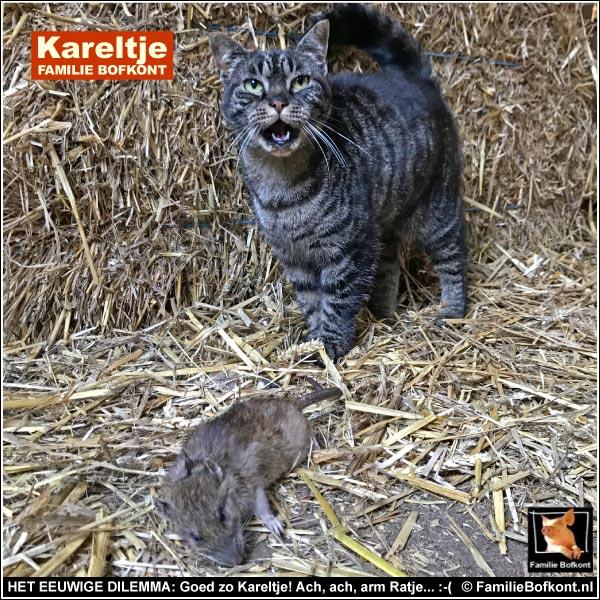 HET EEUWIGE DILEMMA: Goed zo Kareltje! Ach, ach, arm Ratje... :-(