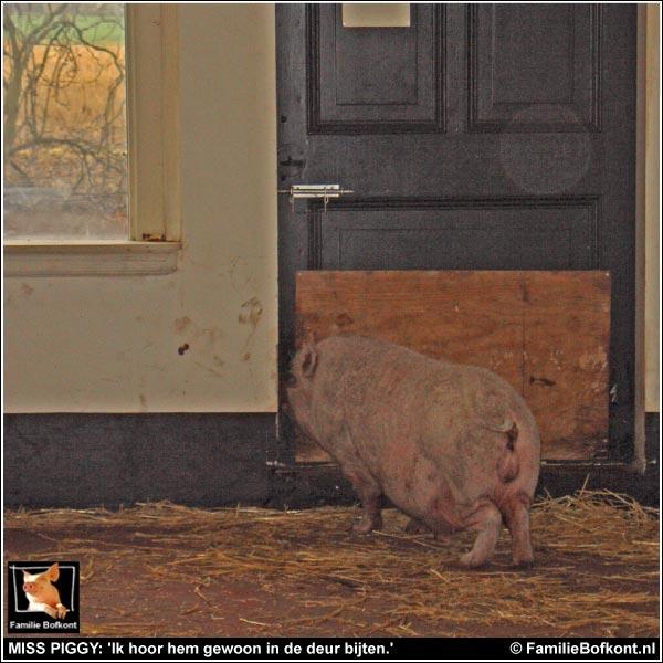 MISS PIGGY: 'Ik hoor hem gewoon in de deur bijten.'