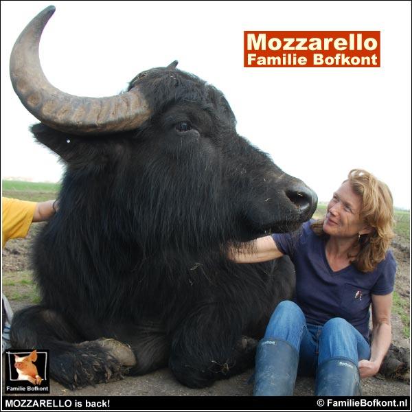MOZZARELLO is back!