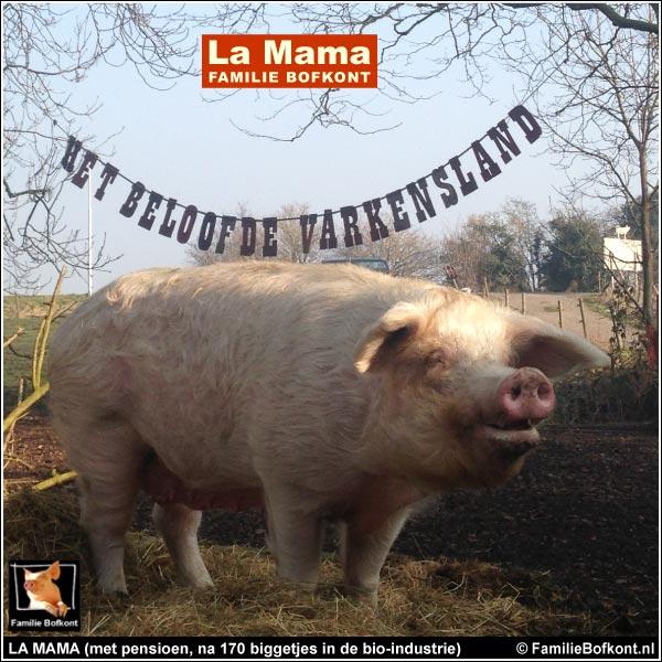 LA MAMA (met pensioen, na 170 biggetjes in de bio-industrie)