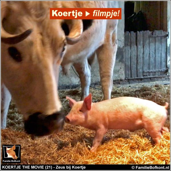 Bofkont TV - Koertje the Movie (21) - stier Zeus bij biggetje Koertje