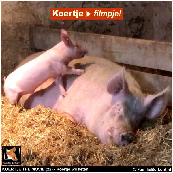 Koertje the Movie 22 - biggetje Koertje wil keten met varken oom Bert en op de strobalen