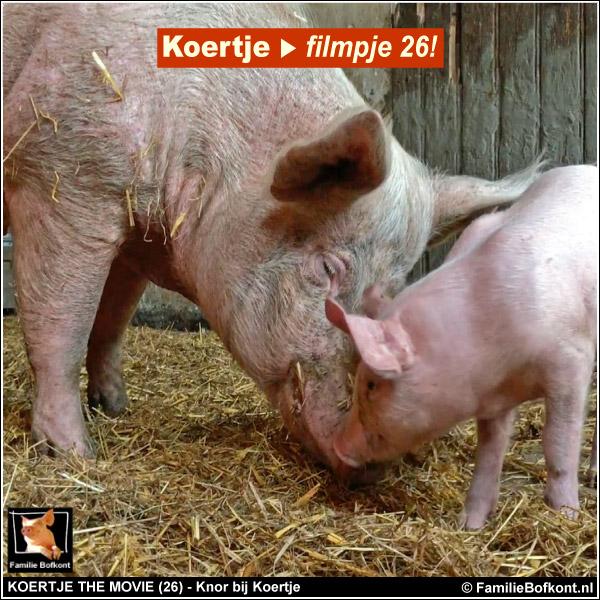 Koertje the Movie 26 - varken Knor bij biggetje Koertje