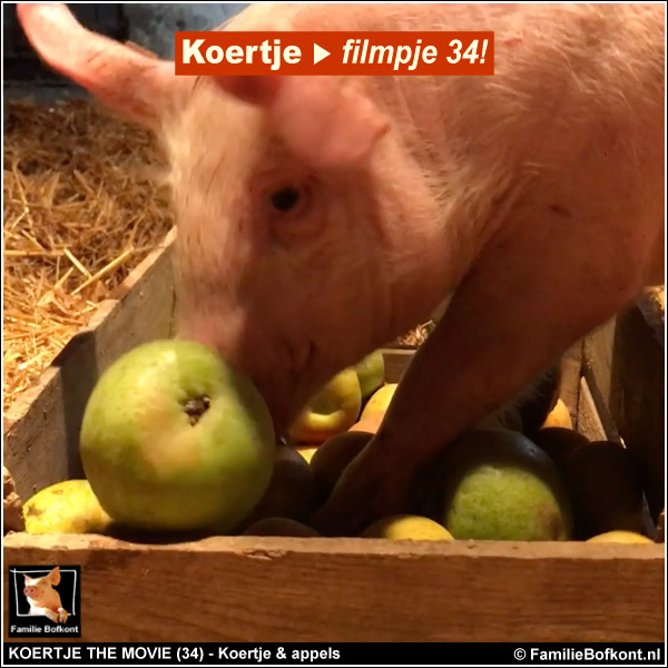 biggetje Koertje en minivarken Brody krat appels - appelfeest op Het Beloofde Varkensland